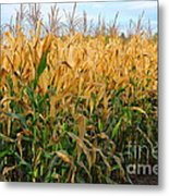 Corn Harvest Metal Print by Terri Gostola