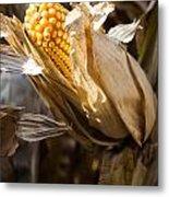 Corn In Husk Metal Print