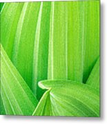 Corn Lily Leaf Detail Yosemite Np California Metal Print