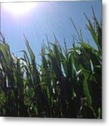 Corn Maze 02 Metal Print