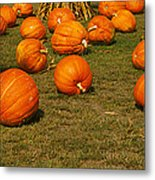 Corn Plants With Pumpkins In A Field Metal Print