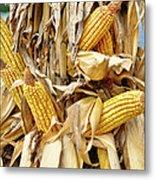 Corn Shock - Sign Of Autumn Metal Print