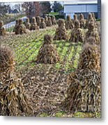 Corn Shocks Amish Field Metal Print