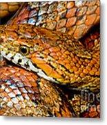 Corn Snake Metal Print