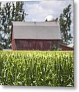 Corn With A Red Barn  Metal Print
