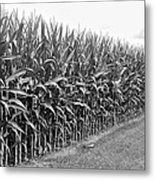 Cornfield Black And White Metal Print