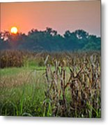Cornfield Morning Metal Print