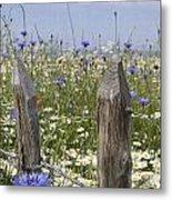 Cornflower Meadow Metal Print