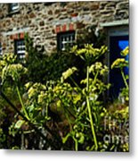 Cornish Cow Parsley  Metal Print