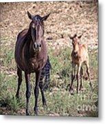 Cortez Colorado Mustangs Metal Print