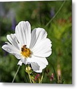 Cosmea And Bee Metal Print