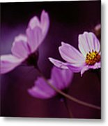 Cosmo After Glow Metal Print