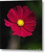 Cosmo In The Red Metal Print