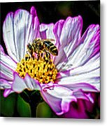 Cosmos Flower And Bee Metal Print