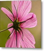 Cosmos In Pink Metal Print