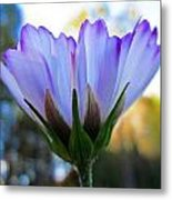 Cosmos Petals Up Metal Print