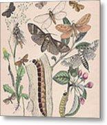 Cossidae - Cochliopodidae - Hepialidae - Psychidae Metal Print