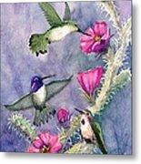 Costa Hummingbird Family Metal Print