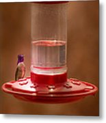 Costa's Hummingbird Keeping Guard Metal Print