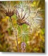 Cotten Grass Metal Print