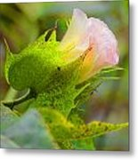 Cotton Flower Metal Print by Julie Cameron