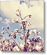 Cotton In The Sky With Filter Metal Print