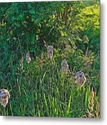 Cotton Monkey Heads Metal Print