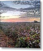 Cotton Sunrise  Metal Print by JC Findley