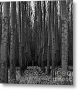 Cottonwood Alley Monochrome Metal Print