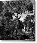 Cottonwood Treem Zion Canyon, Utah. 1929 Metal Print
