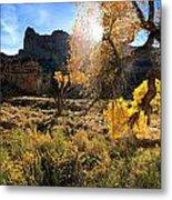 Cottonwoods In Buckhorn Wash 4055 Metal Print