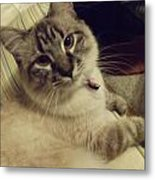 Couched In Comfort Metal Print