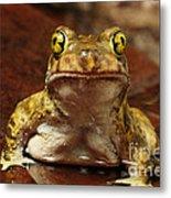 Couchs Spadefoot Toad Metal Print