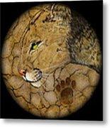 Cougar Metal Print by Ethan  Foxx