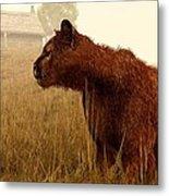 Cougar In A Field Metal Print by Daniel Eskridge