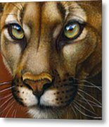Cougar October 2011 Metal Print