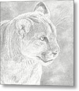 Cougars Gaze Metal Print by Laura Klassen