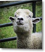 Counting Sheep Metal Print