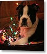 Country Christmas Puppy Metal Print