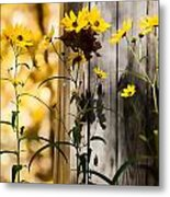 Country Daisy Metal Print
