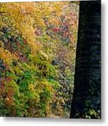 Country Road In Tennessee Metal Print