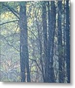 Country Woodlands Metal Print