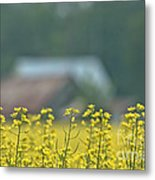 Country Yellow Metal Print