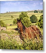 Countryside Horse Metal Print