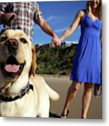 Couple Take Their Dogs For A Walk Metal Print