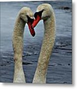 Courting Swans Metal Print