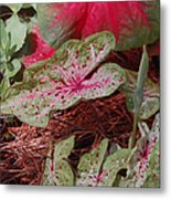 Courtyard Caladium Metal Print