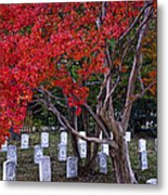 Covered In Fall Colors Metal Print