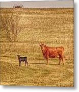 Cow And Calf Metal Print