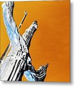 Cow Boy Inverted Metal Print